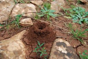 Ameisen krabbeln nicht nur wild durcheinander